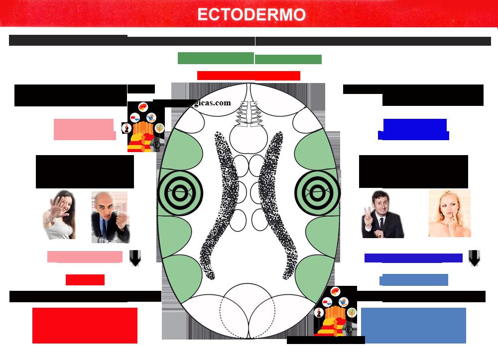 Nueva Medicina Germanica Hamer Ectodermo Corteza Territorial NMG Leyes Biologicas Mania Depresion
