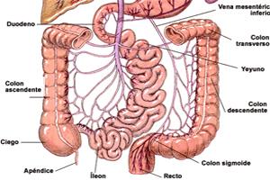 Endodermo Tronco Cerebral Nueva Medicina Germanica Hamer Organos Estomago