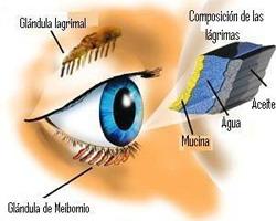 Endodermo Tronco Cerebral Nueva Medicina Germanica Hamer Organos Ojo Glandula Lacrimal