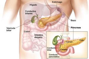Endodermo Tronco Cerebral Nueva Medicina Germanica Hamer Organos Higado