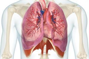 Endodermo Tronco Cerebral Nueva Medicina Germanica Hamer Organos Pulmon Alveolos